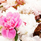 Peony Flower Background - PhotoDune Item for Sale
