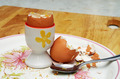 boiled egg and shell on plate - PhotoDune Item for Sale