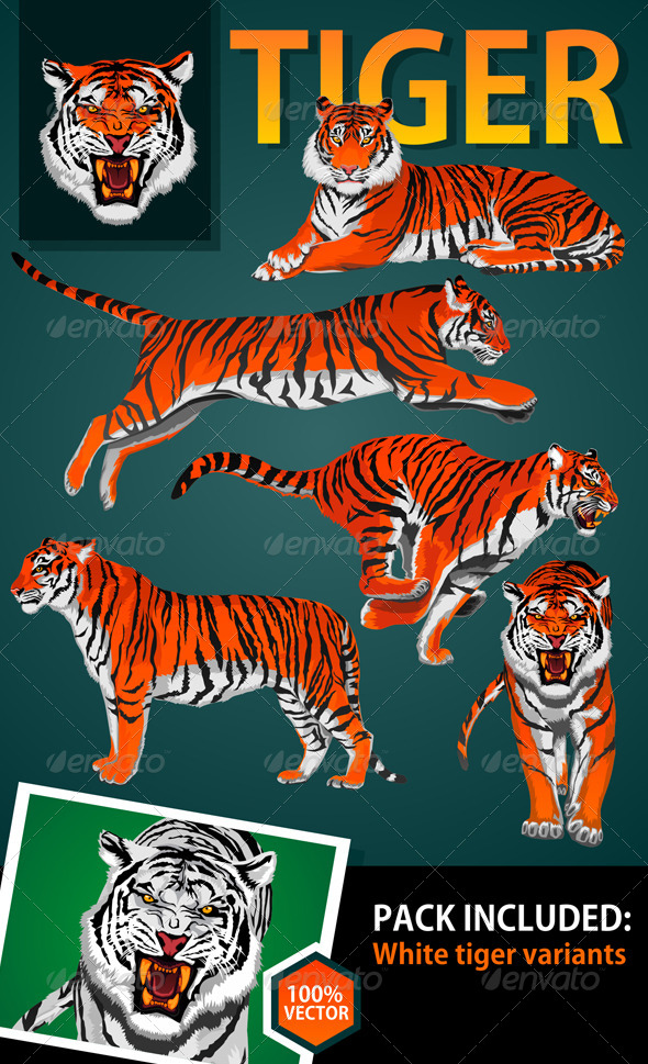 GraphicRiver Tiger 7935536
