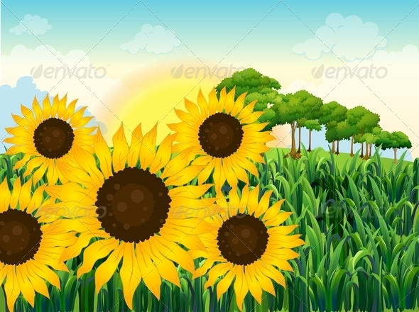 GraphicRiver Sunflowers 7945933