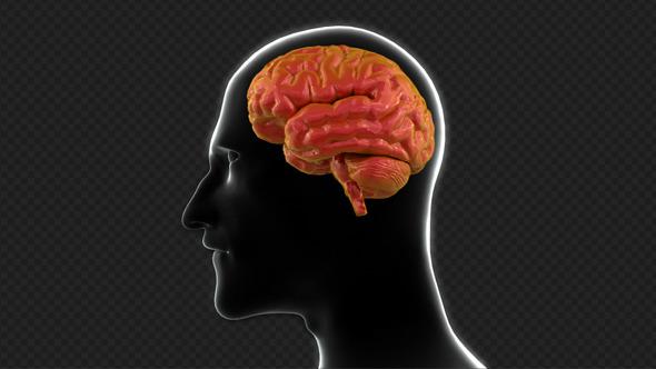 Brain Damage Concept