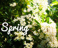 Spring Photo Background Image - PhotoDune Item for Sale