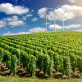 Vineyard landscape with wind generators - PhotoDune Item for Sale