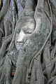 buddha head in tree - PhotoDune Item for Sale