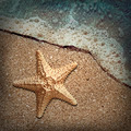 Starfish in the foam of the surf on the shore - PhotoDune Item for Sale