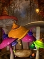 Wonderland Autumnal Mushrooms Place  - PhotoDune Item for Sale