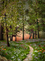 Mysterious Summer Forest  - PhotoDune Item for Sale