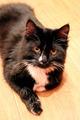 black cat lying on the floor - PhotoDune Item for Sale