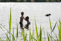 People in a lake - PhotoDune Item for Sale