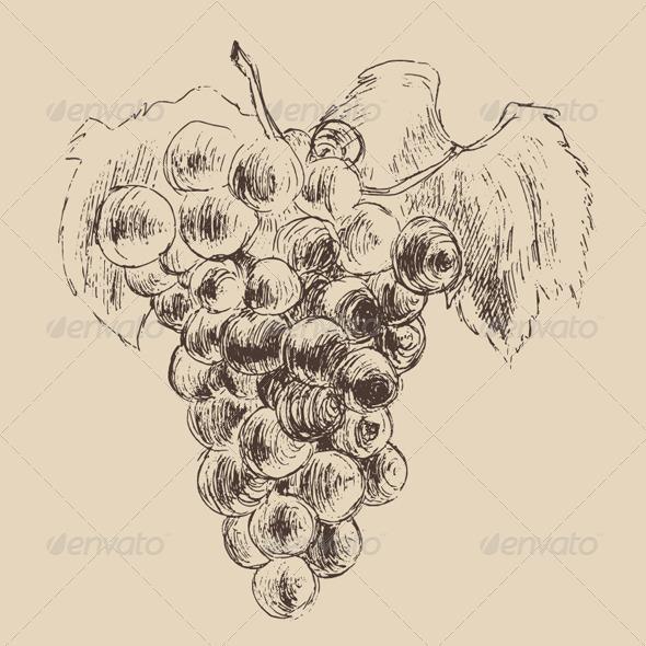 GraphicRiver Bunch of Grapes Vintage Illustration Engraved Ret 7981067