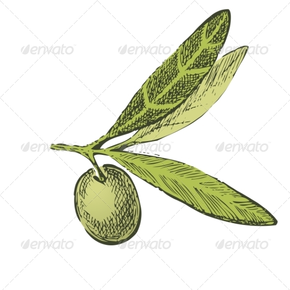 GraphicRiver Hand Drawn Olive Branch 7982164