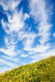 Beautiful cloudscape over green meadow - PhotoDune Item for Sale