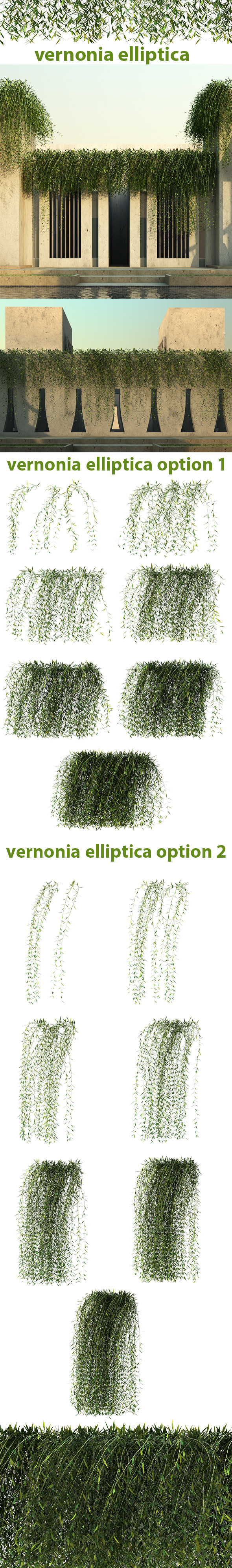 Vernonia Elliptica - 3DOcean Item for Sale