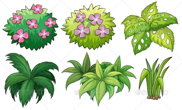 GraphicRiver Six Ornamental Plants 7989109