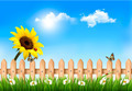 Summer nature background with sunflower and wooden fence.  - PhotoDune Item for Sale