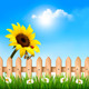 Summer Garden with Sunflower - GraphicRiver Item for Sale
