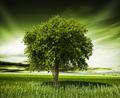 Great nature - PhotoDune Item for Sale