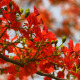 Red Flowers Gently Swaying In The Wind - VideoHive Item for Sale