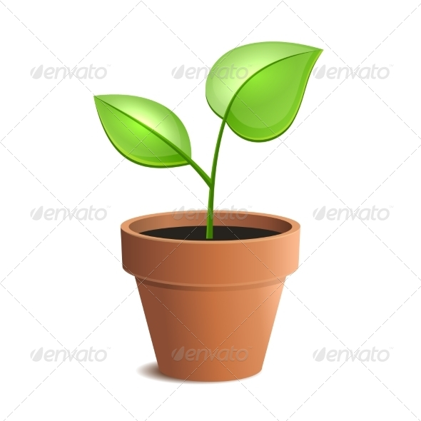 GraphicRiver Young Green Plant in Pot 8008302