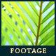 Green Leafs 23 - VideoHive Item for Sale