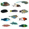 Tropical fish collection - PhotoDune Item for Sale