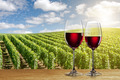 Glass of red wine against vineyard - PhotoDune Item for Sale