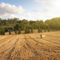 wheat field on sunset - PhotoDune Item for Sale