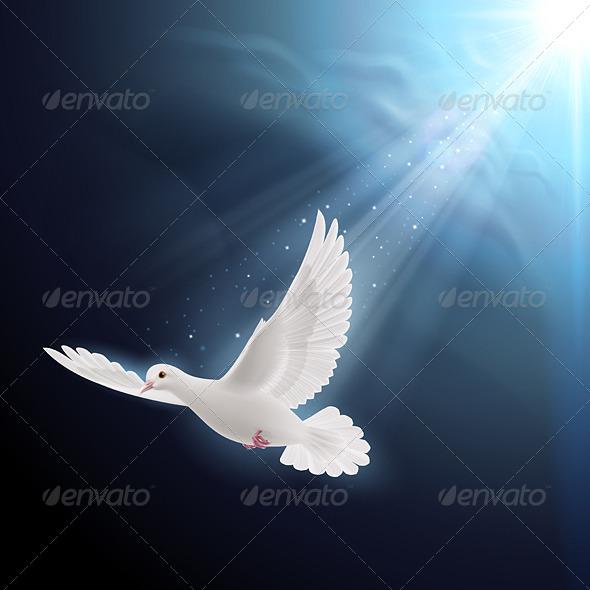 GraphicRiver White Dove in Sunlight 8022316