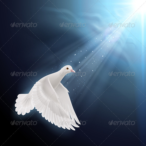 GraphicRiver White Dove in Sunlight 8022319