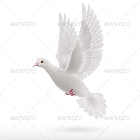 GraphicRiver White Dove 8022516