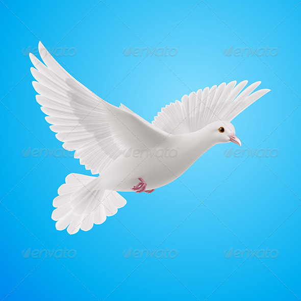 GraphicRiver White Dove 8022520