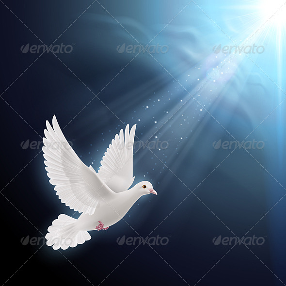 GraphicRiver White Dove in Sunlight 8022522