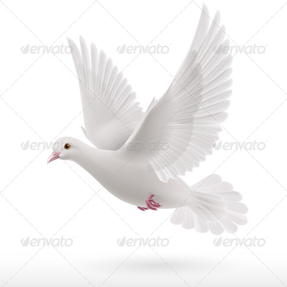 GraphicRiver White Dove 8022950