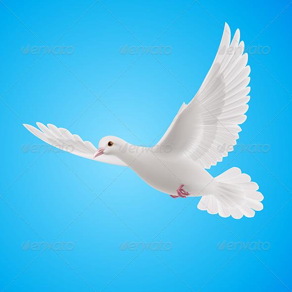GraphicRiver White Dove 8022959