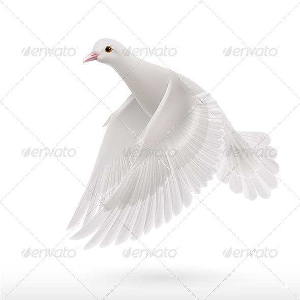 GraphicRiver White Dove 8023608