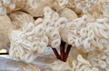 Oyster mushroom in Thailand farm - PhotoDune Item for Sale