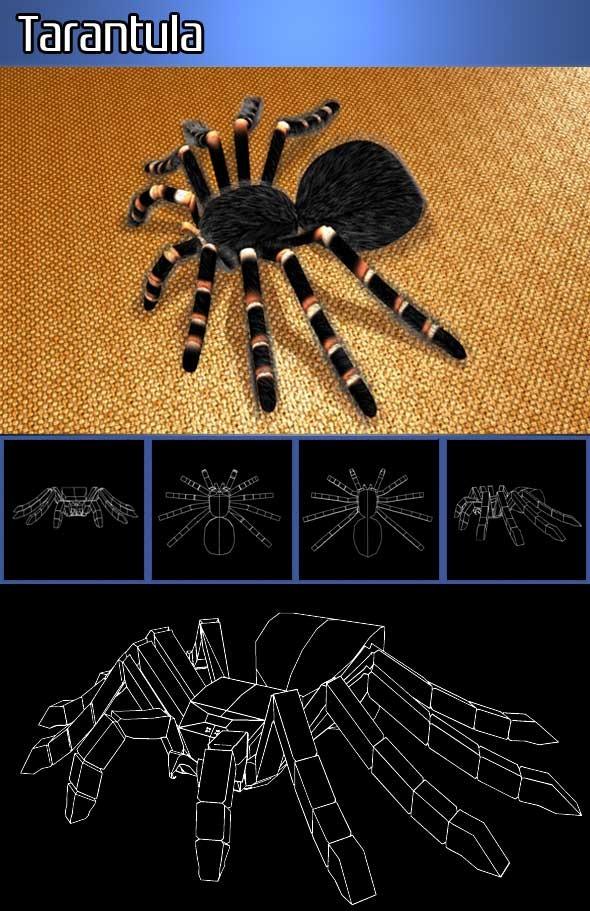 3DOcean Tarantula 819013
