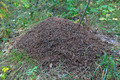 Anthill in the deciduous forest. - PhotoDune Item for Sale