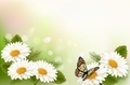 Summer background with yellow beautiful flowers and butterfly.  - PhotoDune Item for Sale