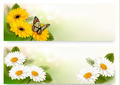 Summer banners with colorful flowers and butterfly.  - PhotoDune Item for Sale