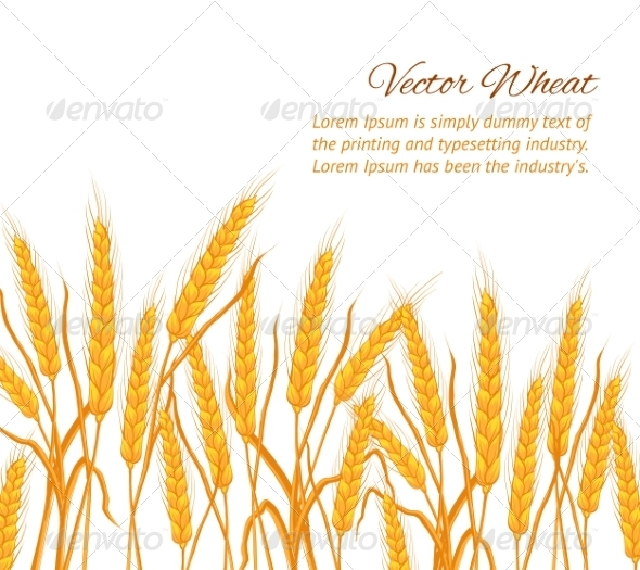 GraphicRiver Wheat Card 8033149