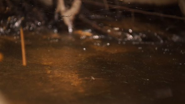 VideoHive Water Spider And Cobweb 8038201