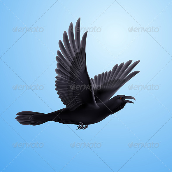 GraphicRiver Black Raven on Blue Background 8040437