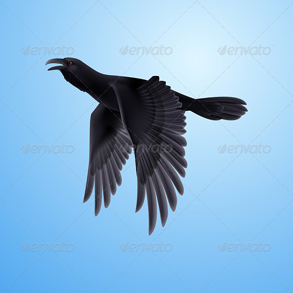 GraphicRiver Black Raven on Blue Background 8040439