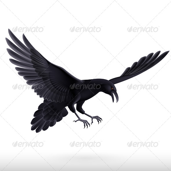 GraphicRiver Raven on White Background 8040998