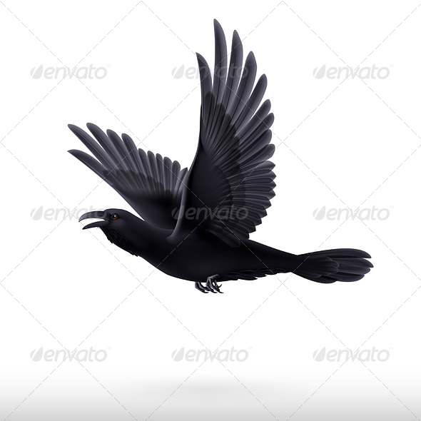 GraphicRiver Black Raven 8041218