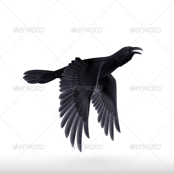 GraphicRiver Black Raven 8041220