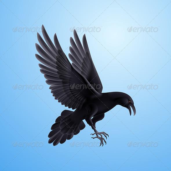 GraphicRiver Black Raven 8041222