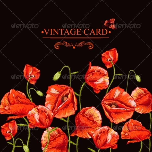 Bunch of Red Poppy Illustration