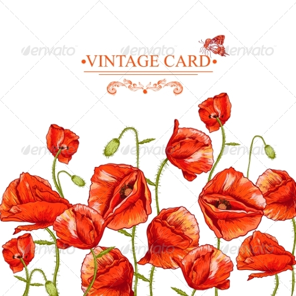 GraphicRiver Bunch of Red Poppy Illustration 8041827